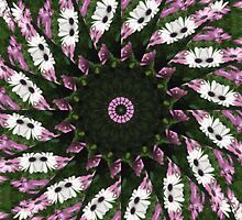 Purple and White Daisies Kaleidoscope 3 by Christopher Johnson