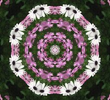 Purple and White Daisies Kaleidoscope 4 by Christopher Johnson