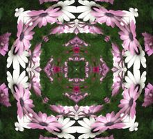 Purple and White Daisies Kaleidoscope 6 by Christopher Johnson