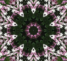 Purple and White Daisies Kaleidoscope 8 by Christopher Johnson
