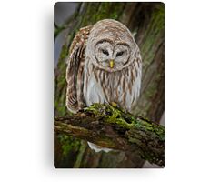 Looking a little down Canvas Print