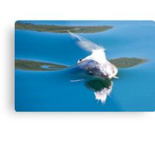 ∞ Doubtful Bottlenose ∞ Metal Print