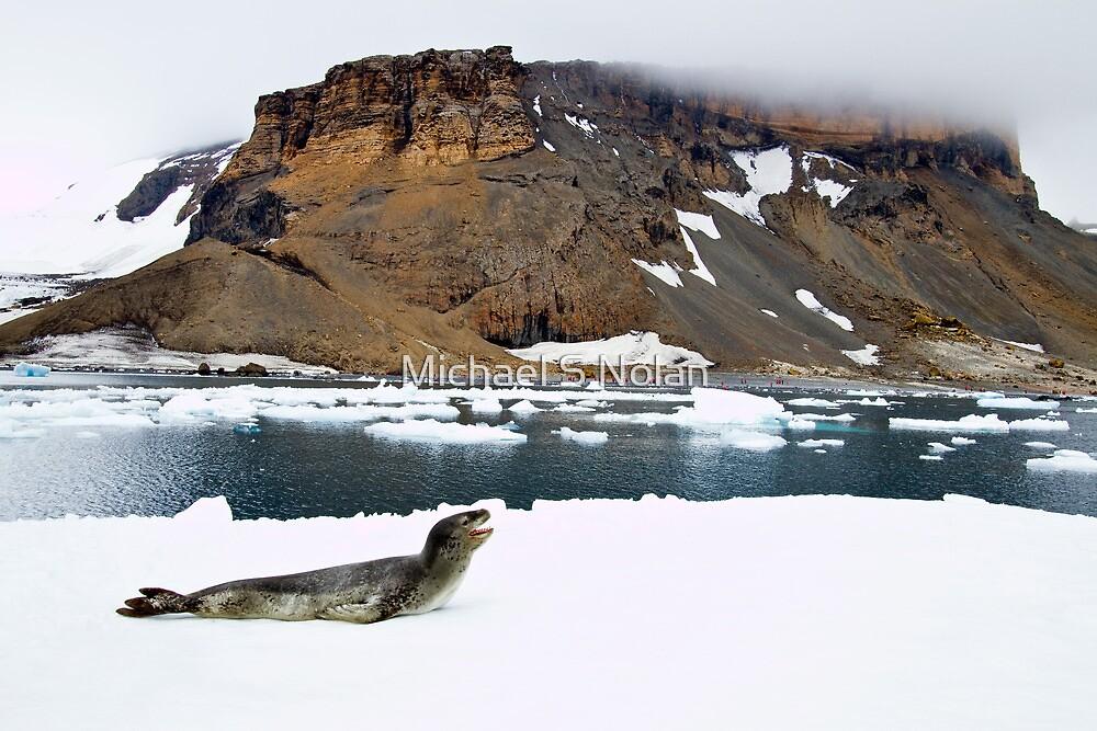 Leopard Seal Bluff by Michael S Nolan