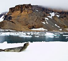 Leopard Seal Bluff by Michael S Nolan