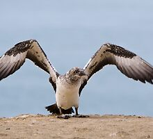 Learning to Fly by Werner Padarin
