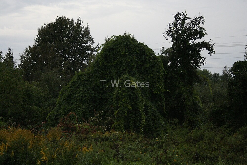 Camoflage by T. W. Gates