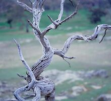 Dead Wood by Anthony Woolley
