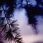 Silhouette at Sunset 4 by Anthony Woolley