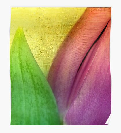 Just a tulip Poster