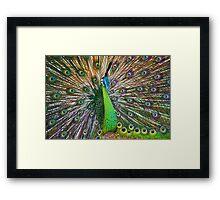 Peacock, Chiang Mai, Thailand Framed Print