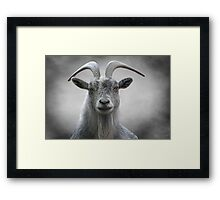 Old Goat Framed Print