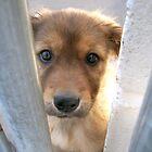 Shelter Dog by chrstnes73
