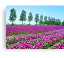 Purple Tulipfield Canvas Print