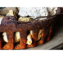 Rusted Iron Fossil Collection Photographic Print