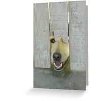 Yellow Lab Peeking Through Worn White Fence Opening Greeting Card