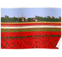 Tulips + mill = Holland! Poster