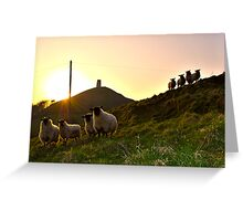 Sheep near Glastonbury Tor Greeting Card