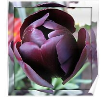 Burgandy Tulip in Mirrored Frame Poster