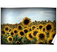 Happy Sunny Sunflowers Poster