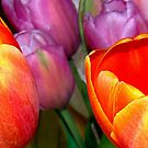 Silky Tulips! by PatChristensen