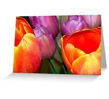 Silky Tulips! Greeting Card