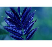 Leaf Me Feeling Blue Photographic Print