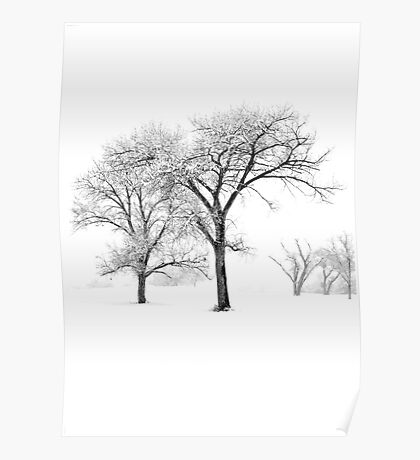 Snow Trees II Poster
