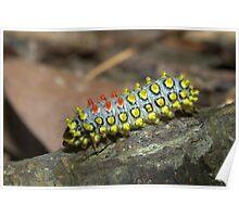Exotic caterpillar, Thailand Poster