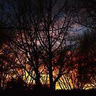 Winter Sunset #7826 by sensameleon