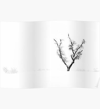 Snow Trees I Poster