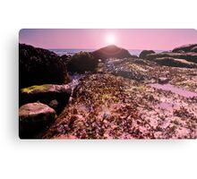 seaweed on the Rocks! Metal Print