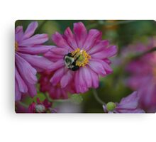 A Bee's Work Canvas Print