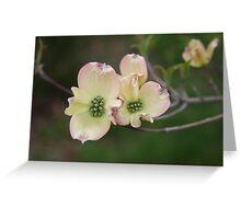 Dogwood springing Greeting Card