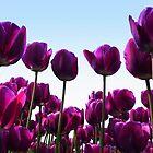 Purple reach the sky by ienemien