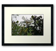 Poppies in silhouette Framed Print