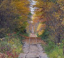 Rail Into The Forest by Ned Elliott