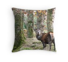 Red deer stag in open woodland Throw Pillow