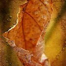 Last Year's Leaf by vigor