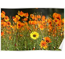 cacophony of a garden Poster