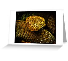 COILED COBRA Greeting Card