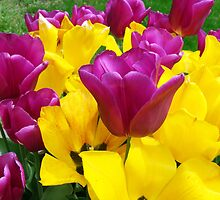 Yellow and Purple Flowers by Daniel B McNeill