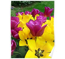 Yellow and Purple Flowers Poster