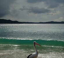 """If Only I Could Surf said the Pelican....If Only I Could Fly said I"" by Of Land & Ocean - Samantha Goode"