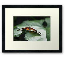Butterfly Penang Framed Print