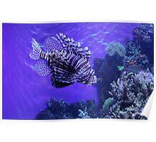 Lion Fish - Denver Aquarium Poster