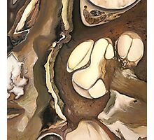 "Cochlea ""Cross Section""  Photographic Print"