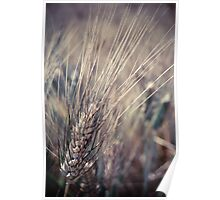 Wheat... Poster