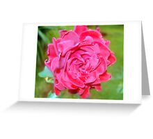 Pinkish hues and tints, grown at Kameeldrift, east of Pretoria, Gauteng, South Africa. Greeting Card