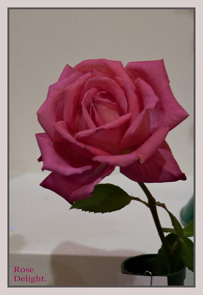 Rose Delight by GW-FotoWerx