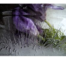Questioning reality - ice work Photographic Print